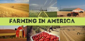 Read more about the article Farming in America